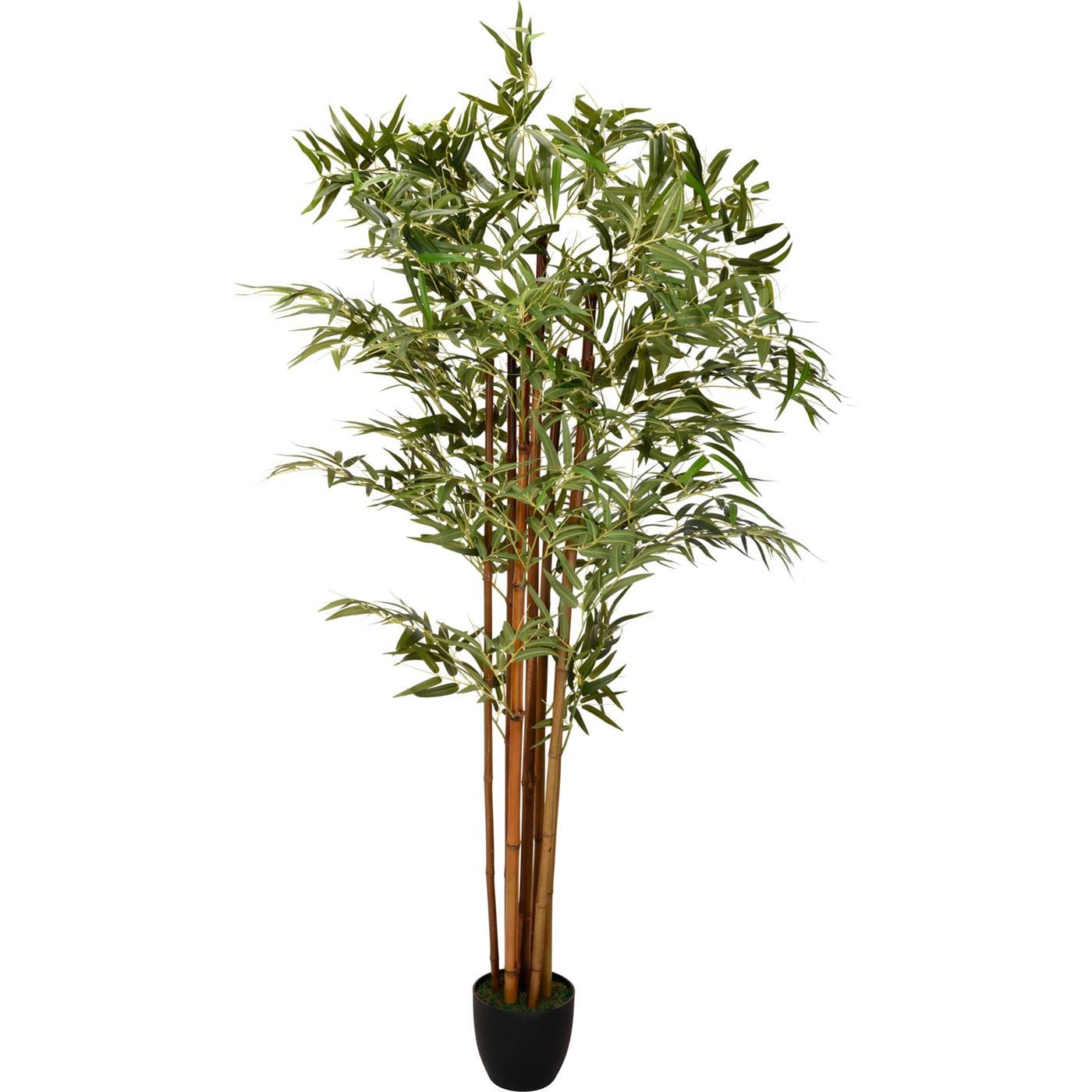 PLANTA EN CRISOL 180cm
