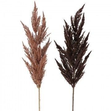Pampasgras rama de decoración,